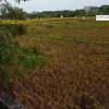 Sta. Rosa, Laguna – Property for Development