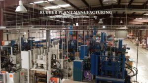 rubber plant p